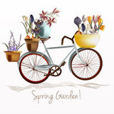 Blue bicycle and potters ful of crocus flowers. Spring garden Stock Image
