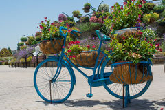 Blue big flower pot shaped bicycle with red flowers inside Royalty Free Stock Image