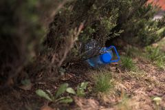 Blue big plastic bottle lying on the ground in tree in a park forest - Thrown out not recycled - Trash and pollution of stock photo