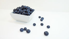 Blue bilberry Stock Photography