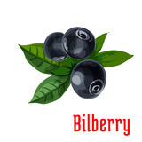 Blue bilberry fruit with green leaves cartoon icon Royalty Free Stock Image