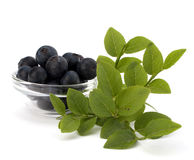 Blue bilberry or whortleberry Royalty Free Stock Photography