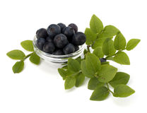 Blue bilberry or whortleberry Stock Photos