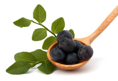 Blue bilberry or whortleberry Royalty Free Stock Image