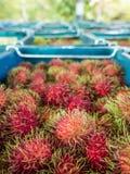 Blue bins with fresh rambutan fruits. Blue bins with piles of red and green rambutan fruits from Thailand Royalty Free Stock Photo
