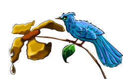 Blue bird. A blue bird with a yellow flower and with water Royalty Free Stock Images