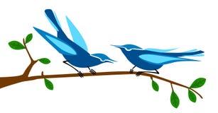 Blue bird. Tweet-tweet blue bird tweeting Stock Photography
