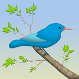 Blue Bird Royalty Free Stock Photo
