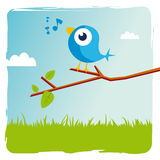 Blue bird. Tweets on a branch Stock Photography