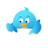 Blue Bird Blank Page. On white background Stock Photos