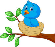 Blue bird cartoon in the nest Stock Images
