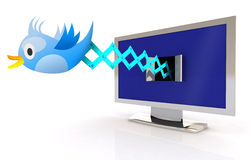 Blue Bird Cuckoo tweets and sings on television. Screen, 3d illustration Royalty Free Stock Image