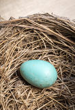 Blue Bird Egg Stock Image