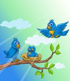 Blue bird family in the morning Stock Photo