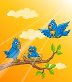 Blue bird family in the morning Stock Photography