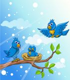 Blue bird family with snow Stock Images