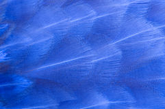 Blue Bird Feathers Macro Royalty Free Stock Image