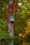 Blue Bird House Surrounded by Leaves in Fall Colors Stock Images