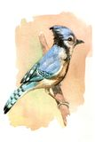 Blue Bird. I love birds and nature. I made with water color painting vector illustration