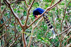 Blue bird. The blue jays took a piece of fruit Stock Photo