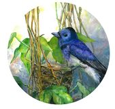 Blue bird on nest in leaves. Watercolor illustration in circle stock illustration