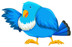 Blue bird. With one wing open Royalty Free Stock Photo