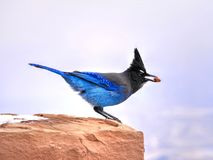Blue bird on red stone. Stock Images