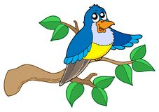 Blue bird sitting on branch Royalty Free Stock Photography