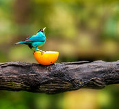 Blue bird sitting on a branch Stock Image