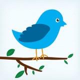 Blue bird. Sitting on a tree branch Stock Photos
