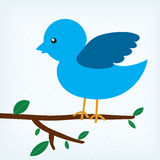 Blue bird sitting on a tree branch Stock Images