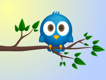 Blue bird sitting on twig Royalty Free Stock Photo