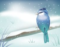 Blue bird in winter landscape Royalty Free Stock Images