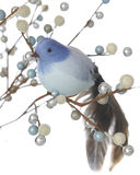 Blue Bird Among Wintery Berries Stock Image