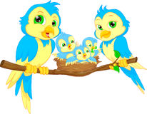 Blue birds family Royalty Free Stock Images