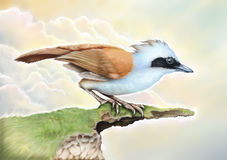 Blue Birds Royalty Free Stock Image
