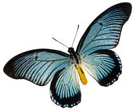 Blue black butterfly Royalty Free Stock Photography