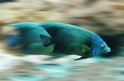 Blue and Black Fish during Daytime Stock Image
