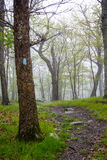 Blue Blaze Trail in the Fog Royalty Free Stock Photos