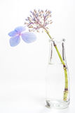 Blue blossom on long stem in bottle of water Stock Photos