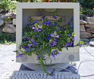 Blue blossoms in a computer monitor Stock Images