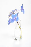 Blue blossoms on long stem in bottle of water Stock Image