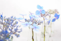Blue blossoms in transparent glass bottles. Airy blue blossoms in transparent glass bottles Royalty Free Stock Photo