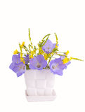 Blue bluebell in a white vase Royalty Free Stock Images