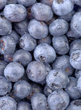 Blue Blueberry-Vertical. A high resolution vertical macro of freshly washed blueberry fruit. (12MP camera Royalty Free Stock Photos
