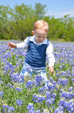 Blue Bonnet Baby Royalty Free Stock Photos