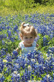 Blue Bonnet Portrait. Two year old little girl sitting amongst a big bed of blue bonnet flowers Stock Image