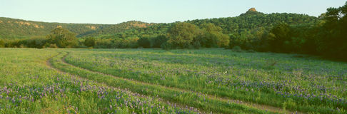 Blue Bonnets in Hill Country Stock Photography