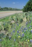 Blue bonnets and wild spring flowers along a road in Texas Royalty Free Stock Photo