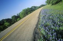 Blue bonnets and wild spring flowers along a road in Texas Stock Photos